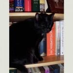 Pebble, literate cat