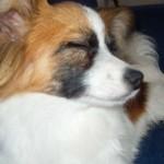 Milo, sleepy(ish)