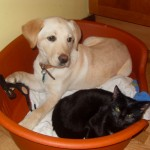 Cluny as a puppy, already having his bed hijacked by The Darkness